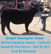 Northern Exposure Champion Steer