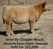Choppin Wood Steer Sold For $22,000