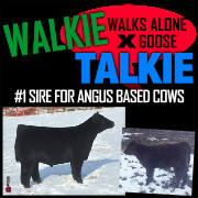 #1 Option For Angus  Based Cows