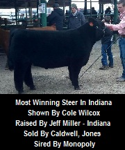 Most Dominant Indiana Steer