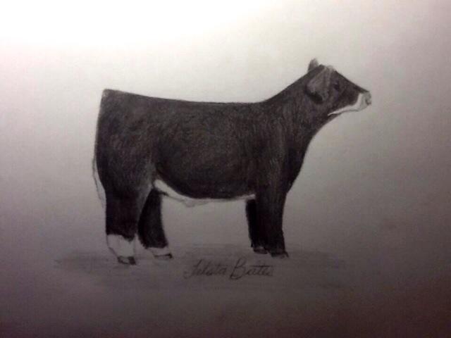 From Trista Bates Montana Pencil Sketch I Did Of Bodacious