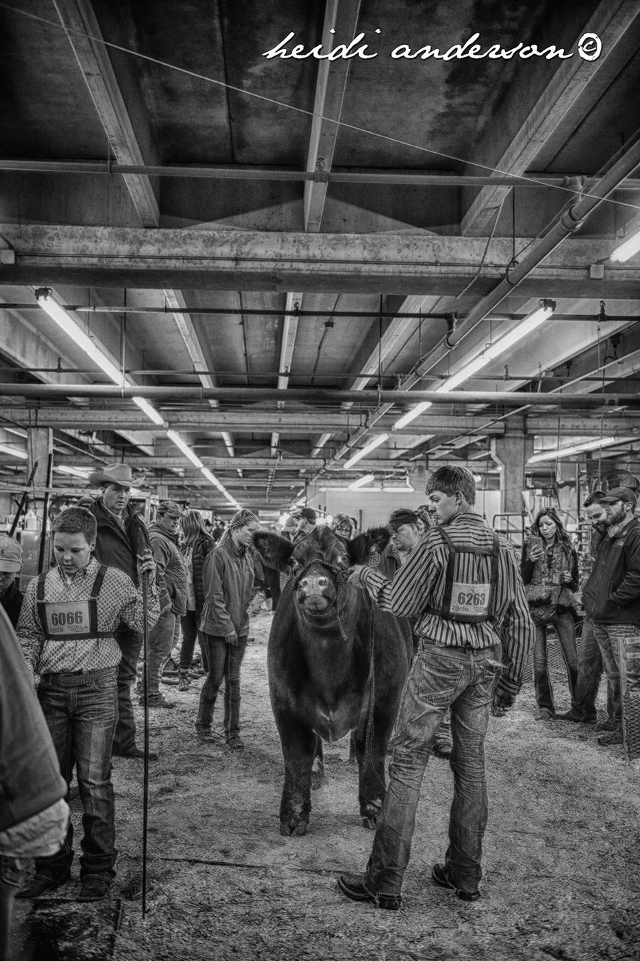 Stock options livestock marketing