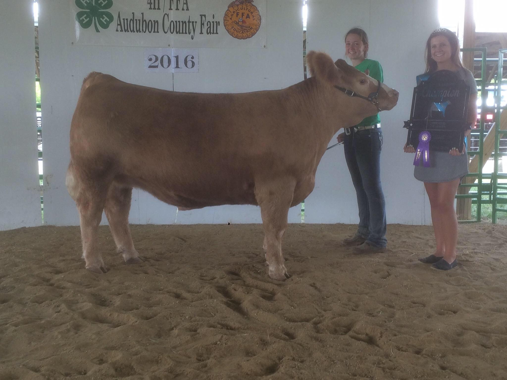 Another champion raised by danker show cattle of avoca iowa audubon