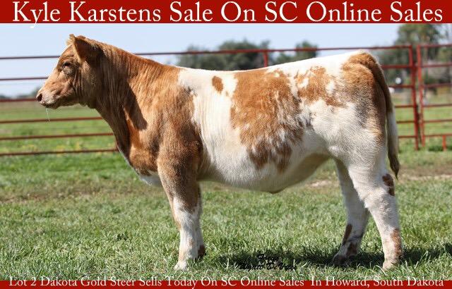 Kyle Karstens Lot 2 Dakota Gold Steer Sells Today On SC
