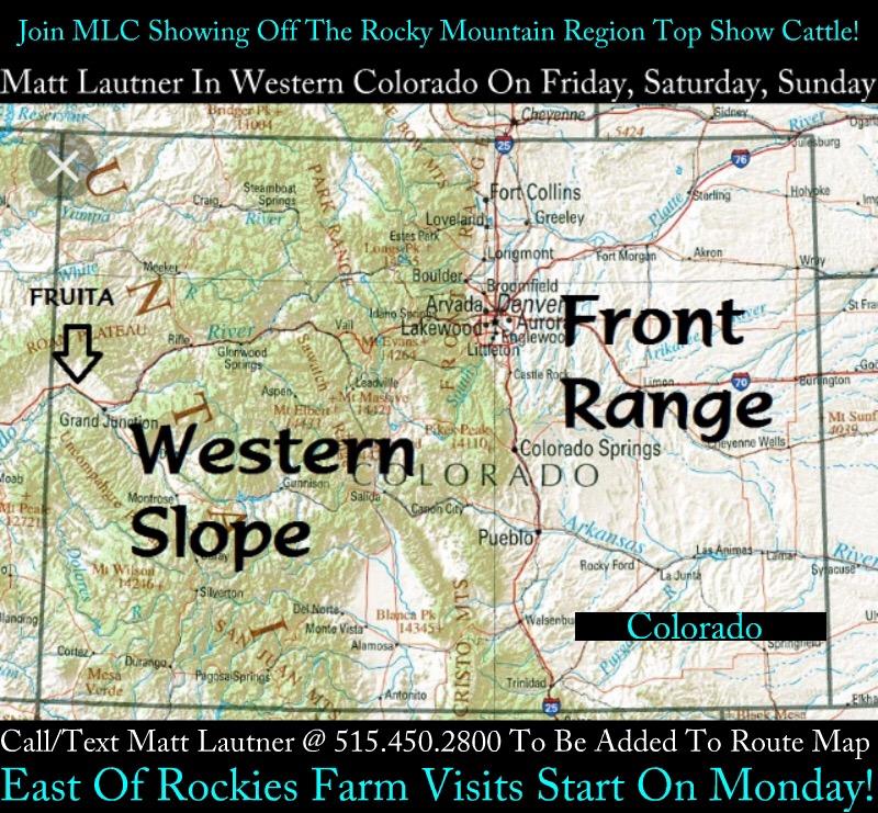 They Were All Raised In Western Colorado Matt Lautner Cattle