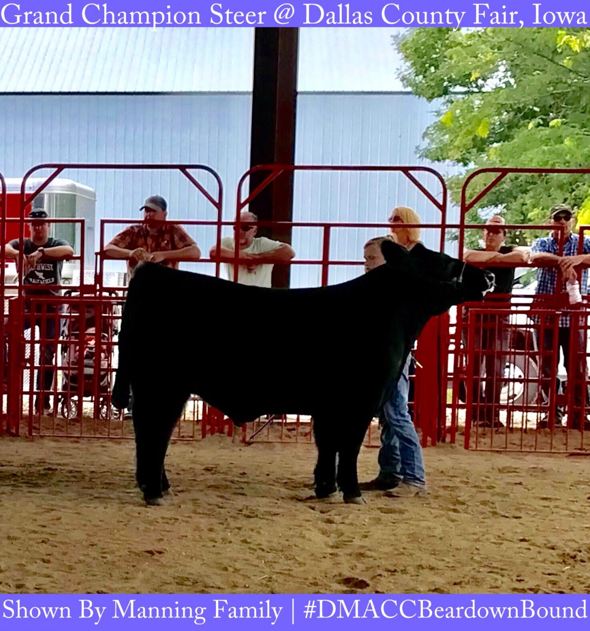 Exciting junior show day in Adel, Iowa at Dallas County ...